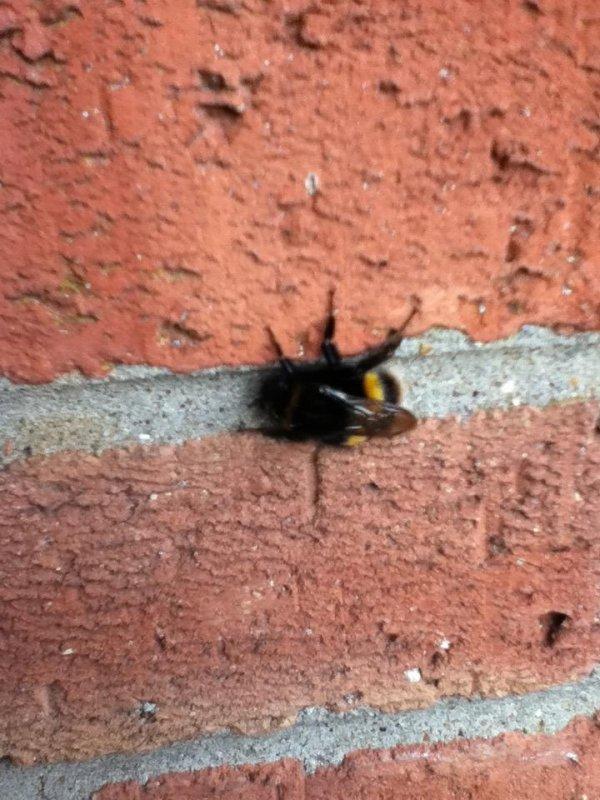 Bug 🐝 #mbaug 📷 ♻ 20130927