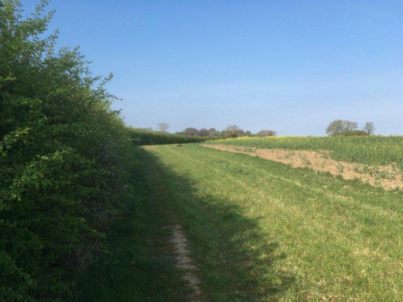 A fox in a field 🦊
