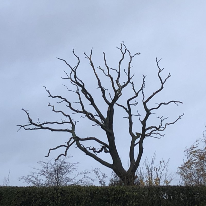 There is nothing spooky about this tree