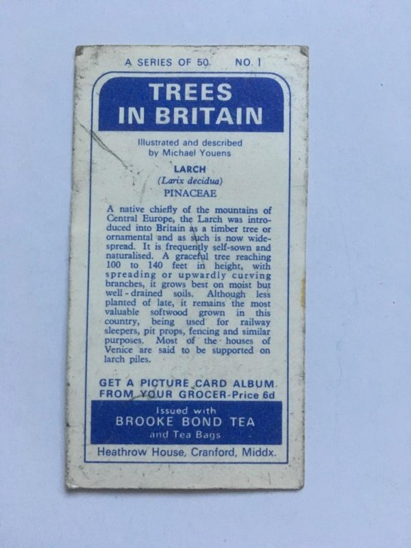 Brooke Bond Trees in Britain – Larch – Reverse of Brooke Bond Tea Larch info card