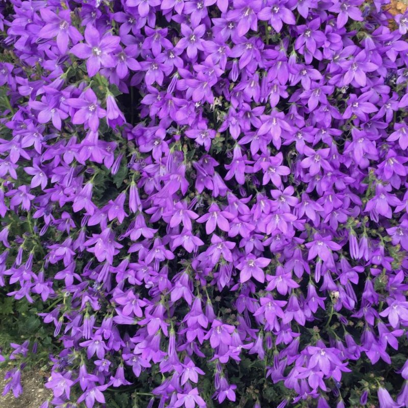 🌈📷 #7 Violet Roxo Purple?