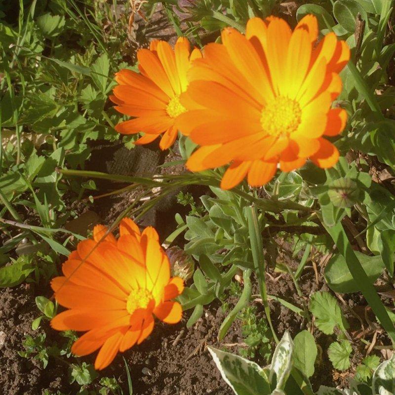 🌈📷 #2 Orange Arancione Laranja 🟠