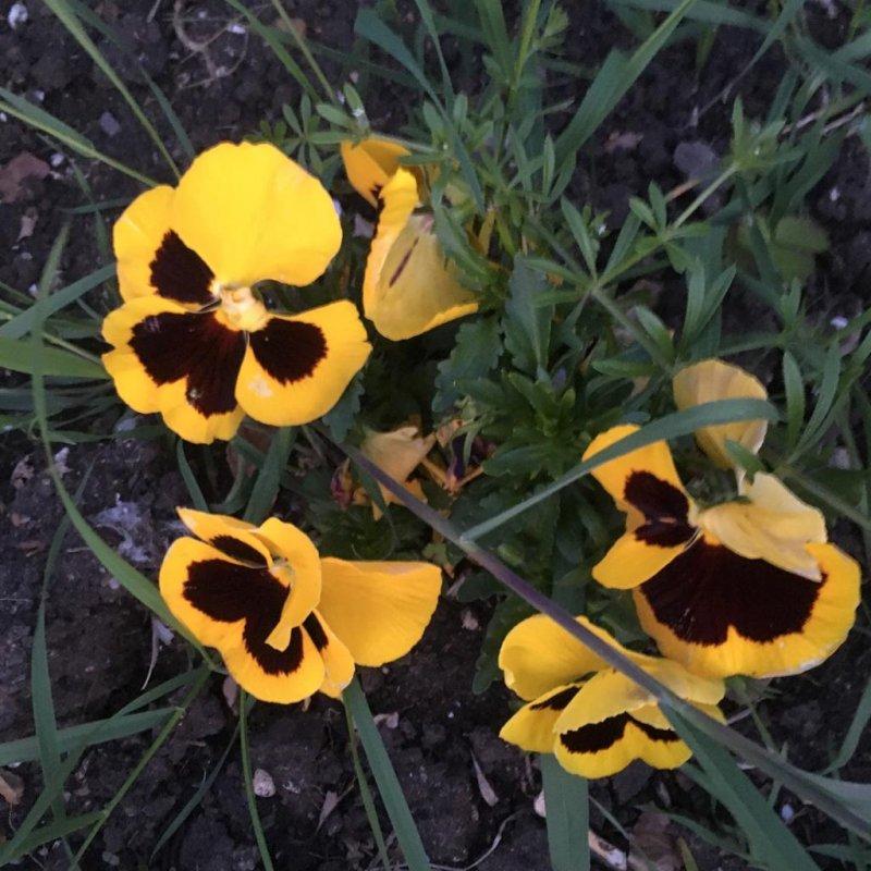 🌈📷 #3 Yellow Jaune Gelb Amarillo